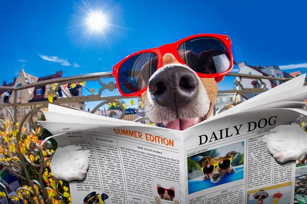 en hund som håller i en tidning